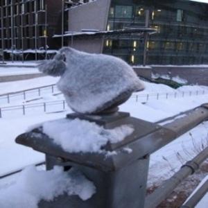 54 woolly hats 2012